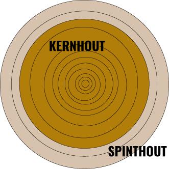 Kern- en spinthout