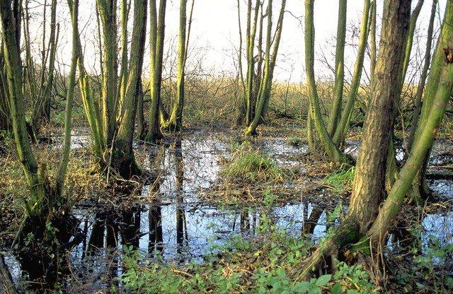 voorbeeld van een elzenbroekbos
