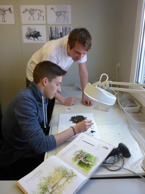 de leerlingen van het Koninklijk Atheneum van Dendermonden krijgen een eerste introductie tot de studie van prehistorisch vondstmateriaal onder begeleiding van Hans en Luc